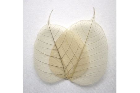 Natural Bodhi Tree Leaves