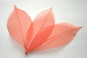 Orange Skeleton Leaves