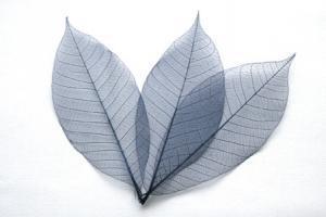 Dark Blue Skeleton Leaves