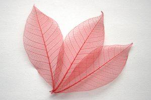 Red Skeleton Leaves