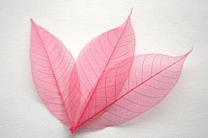 Pink Skeleton Leaves