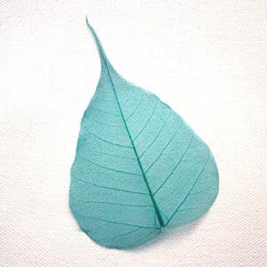 Turquoise Bodhi Tree Skeleton Leaf