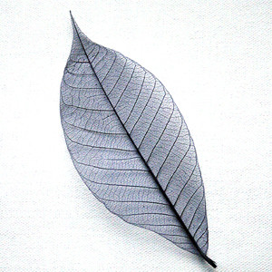 Dark Blue Skeleton Leaf