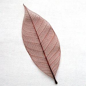 Brown Skeleton Leaf