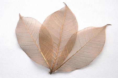 Copper Skeleton Leaves