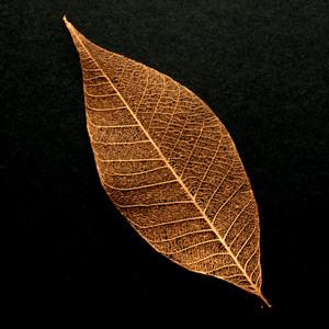 Copper Skeleton Leaf
