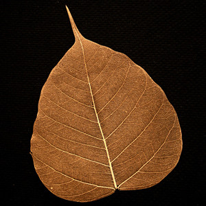 Copper Bodhi Tree Skeleton Leaf for sale