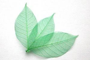 Forest Green Skeleton Leaves