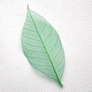 Forest Green Skeleton Leaf