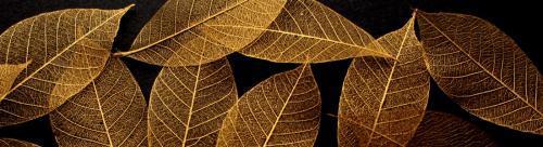 Gold Skeleton Leaves for sale