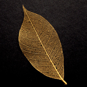 Gold Skeleton Leaf for sale