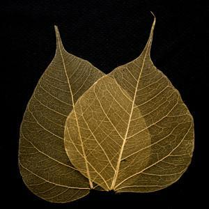 Gold Bodhi Tree Skeleton Leaves