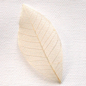 Ivory Skeleton Leaf for sale