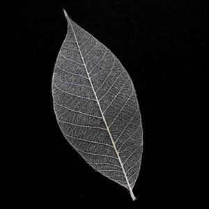 Natural Skeleton Leaf for sale