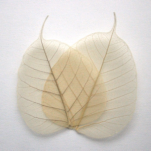 Natural Bodhi Tree Skeleton Leaves for sale