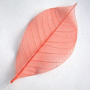 Orange Skeleton Leaf