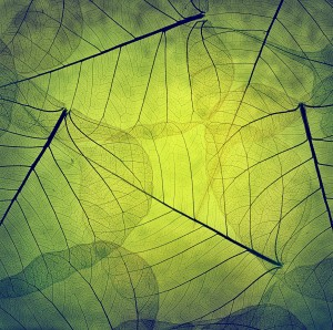 Beautiful skeleton leaves
