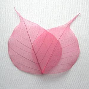 Pink Bodhi Tree Skeleton Leaves