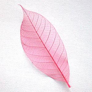 Pink Skeleton Leaf