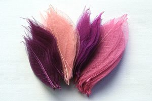 Shades of Pink & Purple Skeleton Leaf Selection