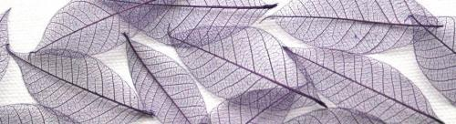 Purple Skeleton Leaves for sale