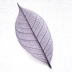 Purple Skeleton Leaf for sale