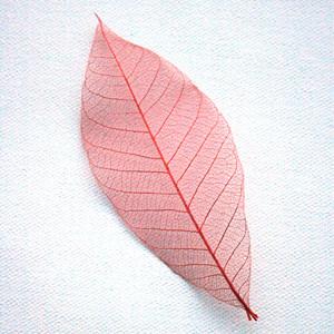 Red Skeleton Leaf