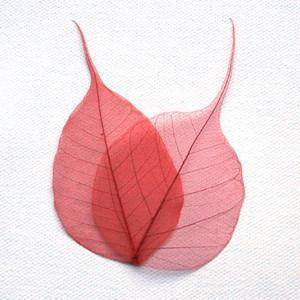 Red Bodhi Tree Skeleton Leaves