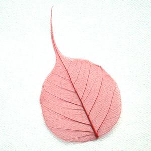 Red Bodhi Tree Skeleton Leaf