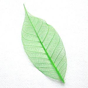 Spring Green Skeleton Leaf
