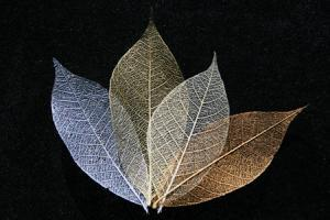 Gold, Silver, Copper and Ivory Skeleton Leaf Selection