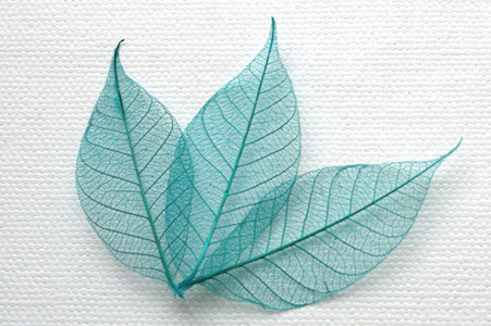 Turquoise Skeleton Leaves for sale