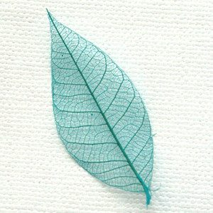 Turquoise Bodhi Leaves
