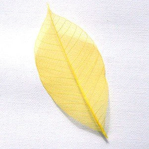 Yellow Skeleton Leaf