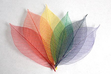 Rainbow Skeleton Leaf Selection for sale