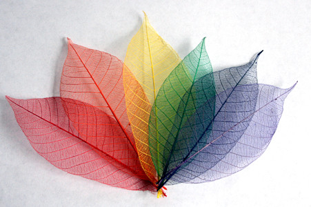 Rainbow Skeleton Leaf Selection