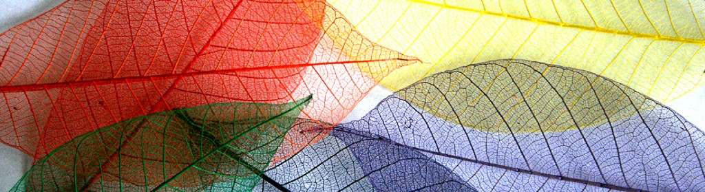 Rainbow Skeleton Leaf Selection for sale