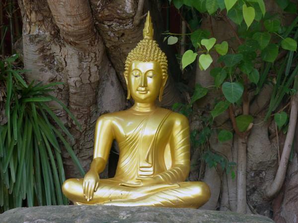 Buddhas and Bodhis - Wat Pan Tao